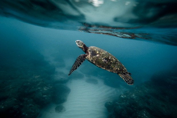 Destinations to make a difference:Rehabilitate sea turtles in Australia