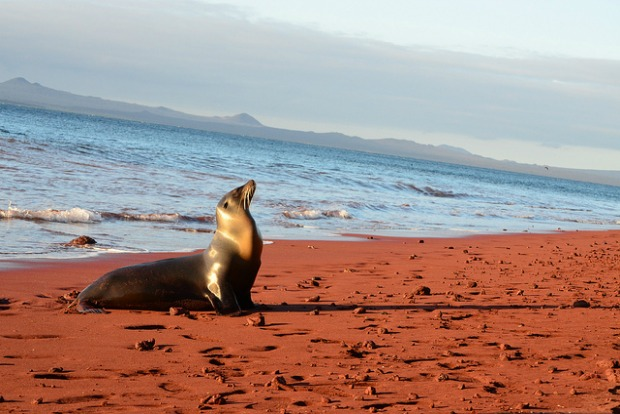 island conservation in the Galapagos