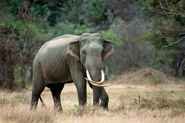 Elephant research and conservation in Sri Lanka