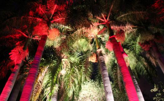 Patty Ho, South Beach, Miami via Flickr CC BY 2.0