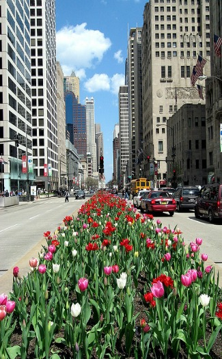 Top 10: Bucket list for Chicago