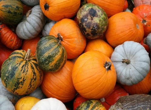 Pumpkins (Image: juantiagues)